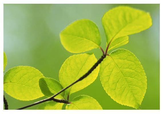 La sostenibilidad y medio ambiente